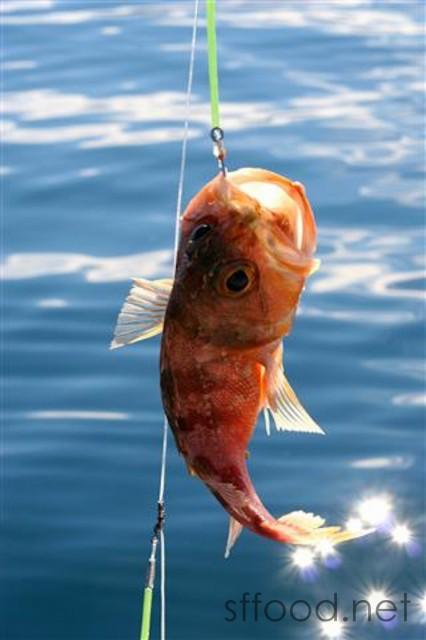new zealand fishing